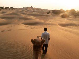 Camel Safari by srjodhpurtaxiservice